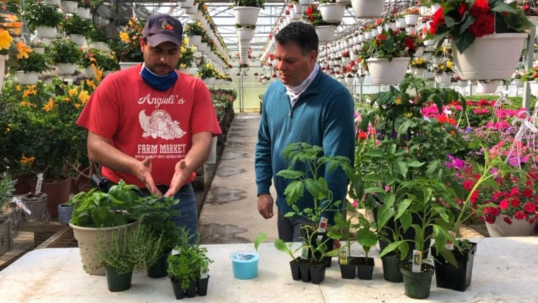 Summer Vegetable Planting | In The Spotlight
