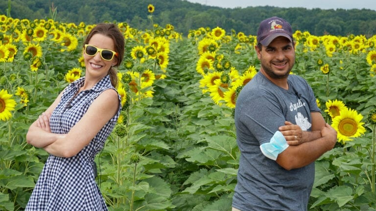 Angiuli's Sunflower Sensation | Angiuli's Farm Market