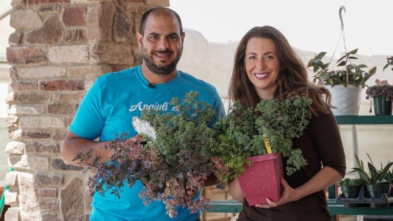 House Plant Advice | Angiuli's Farm Market
