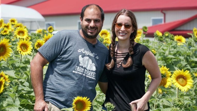 Sunset Sunflower Picking | Angiuli's Farm Market